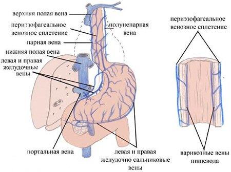 Геморрагический васкулит у детей лечение народными средствами
